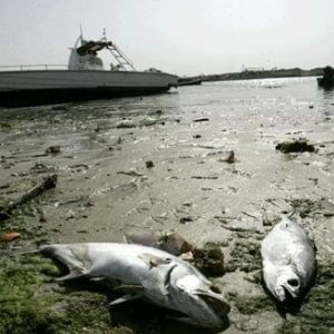 If you see dead fish on a beach – would you eat it?