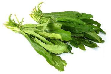 Vietnamese Coriander (aka ngo gai or recao)