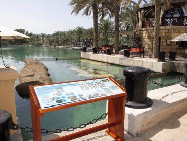 Burj Al Arab – Turtle Rehab Center