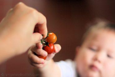 Wee Scotch tomato