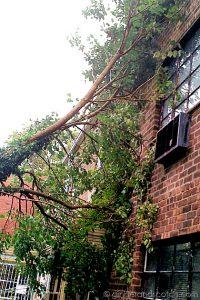 Tree Down in Queens