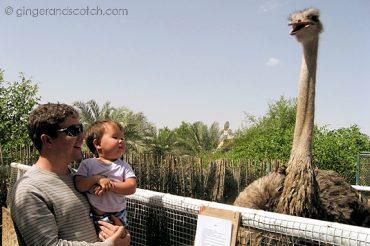 Big emu
