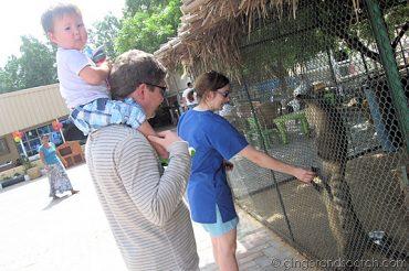 Rhian feeding the coati