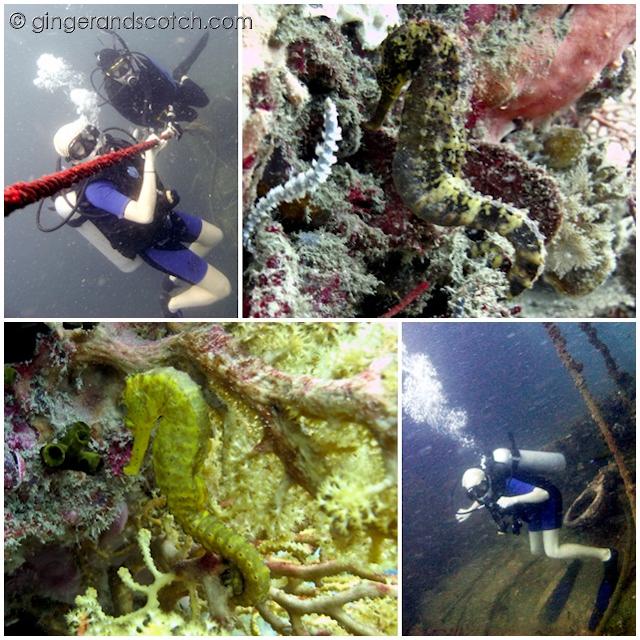 Phuket Scuba Diving