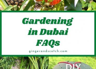 Gardening in Dubai – FAQs